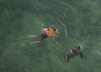 ハワイのホテルから見えたウミガメ