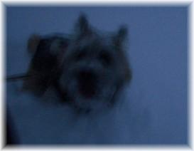 ぷる、雪遊び中