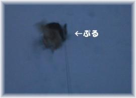 ぷる、雪の中ダッシュ。