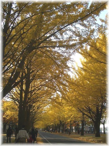 北大イチョウ並木