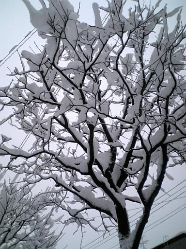 木と電線の雪