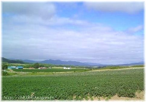 ニセコの一面芋畑。