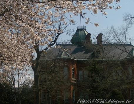 道庁の桜~
