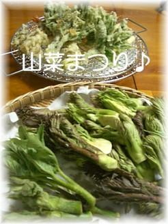 ニセコの山菜三昧