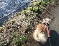 雪どけ散歩ラン♪