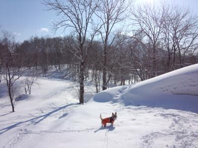 空き地の雪あそび中