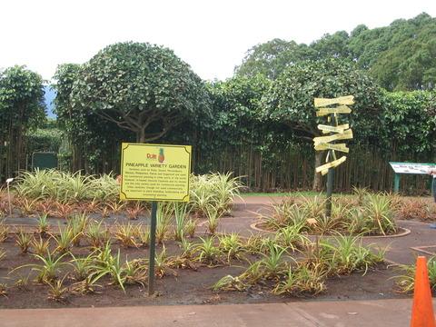 Dole・Plantation