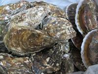 サロマ湖の牡蠣とかホタテとか