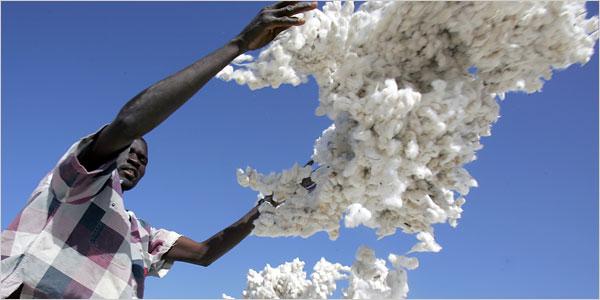 ◆飢餓問題11 綿花をめぐるバトルロワイヤル