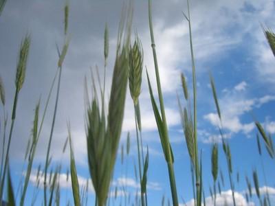 ◆飢餓問題2  飢餓問題を適当に俯瞰してみる。。。
