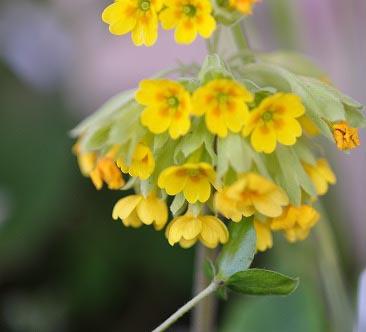 春の湿生花園