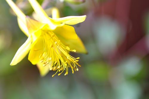 初夏の花(湿生花園)
