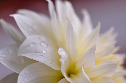 鴨川海岸の花