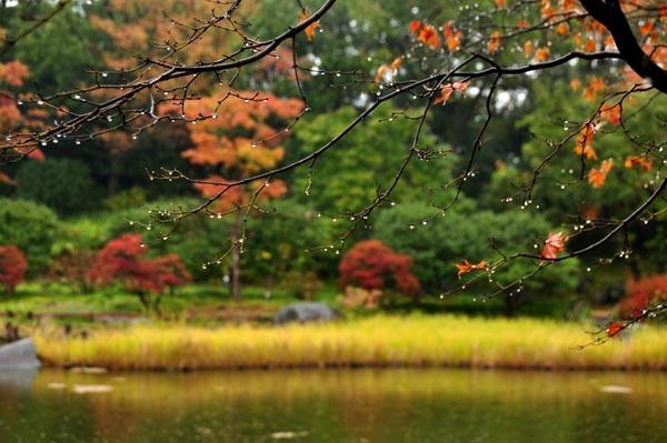 雨の昭和記念公園(撮影会)
