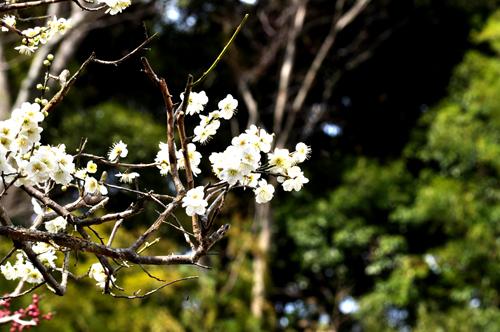箱根湯本散策