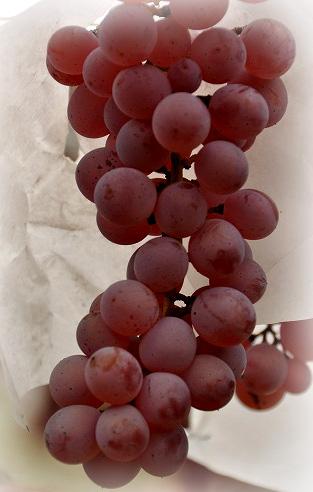 山梨ワイン工場の美味しいワイン