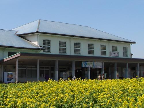 春はすぐそこ・横須賀線《プロローグ》=菜の花と久里浜駅=