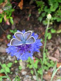花と蝶2:nonno ノンノとheporap ヘポラプ