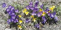 初夏の陽気~4月26日のミーティング