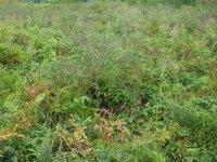 更別湿原のヤチカンバについて北海道教育委員会からの回答
