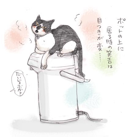 猫とポット