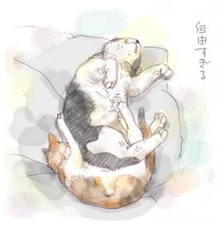 本日の外猫