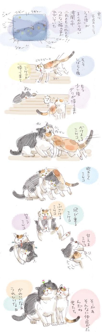 猫界的「夫婦善哉」