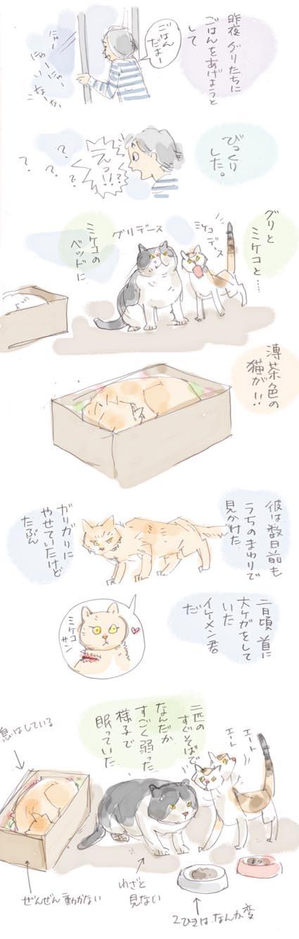 猫界の不思議...再び