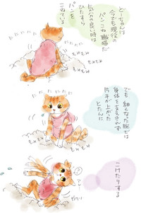 現役パンこね職人(猫)