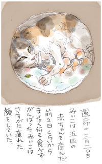 みぃこのこと(15)