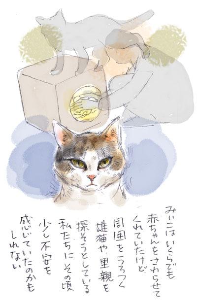 みぃこのこと(18)(19)