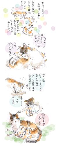 みぃこのこと(22)