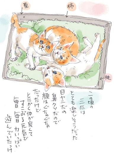 みぃこのこと(24)