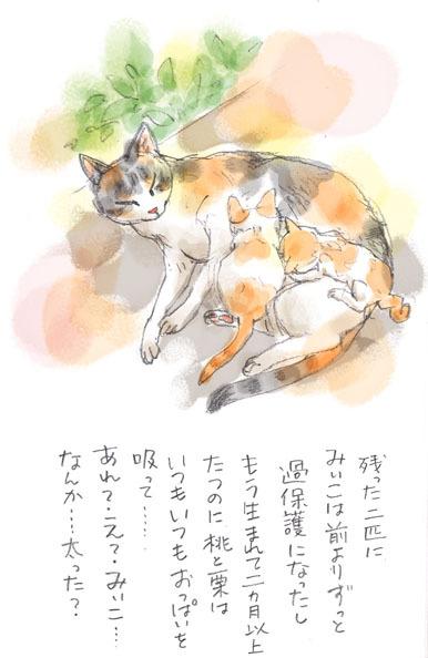 みぃこのこと(25)