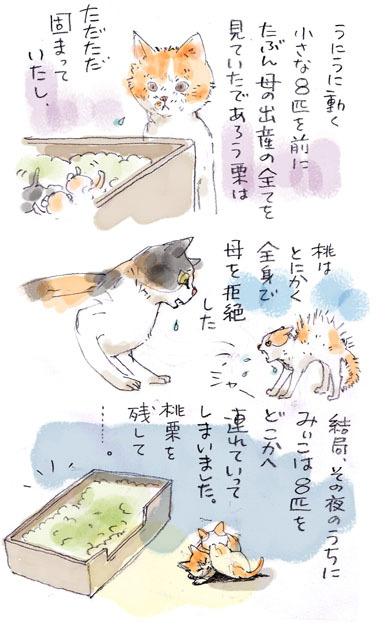 みぃこのこと(27)
