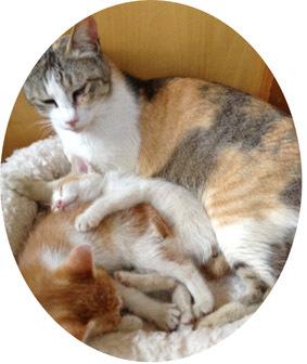 母(猫)の日
