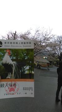 上野動物園行ってきた