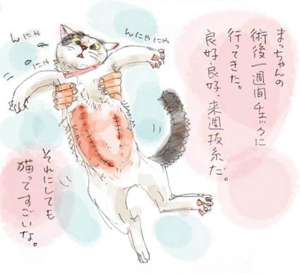 猫ってすごいな