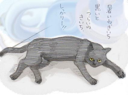 真夏の黒猫