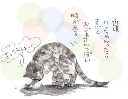 中高年な猫