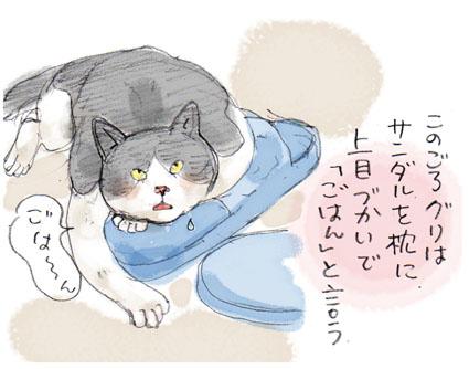 上目づかいな猫
