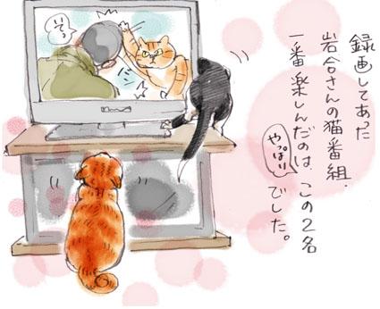 岩合さんの番組だっ!!