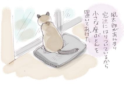 待ち猫来たらず.......