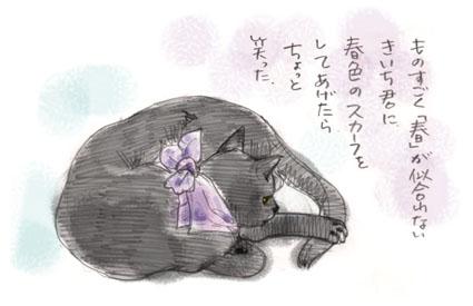 黒猫にスカーフ