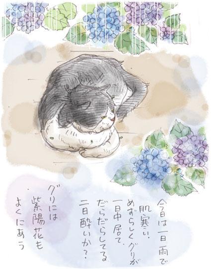 グリと紫陽花