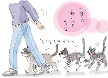 猫の兵法-其の拾弐「自発的集団行動」