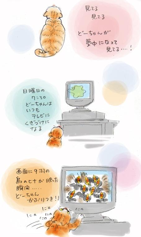 『ダーウィンが来た!』の時間