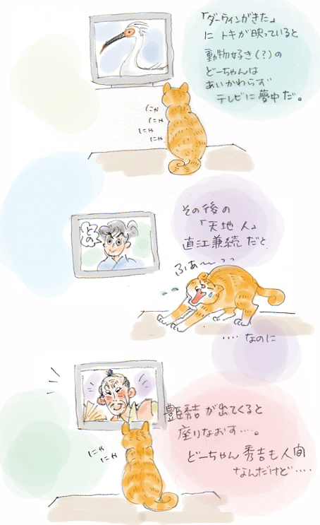 動物好きな猫