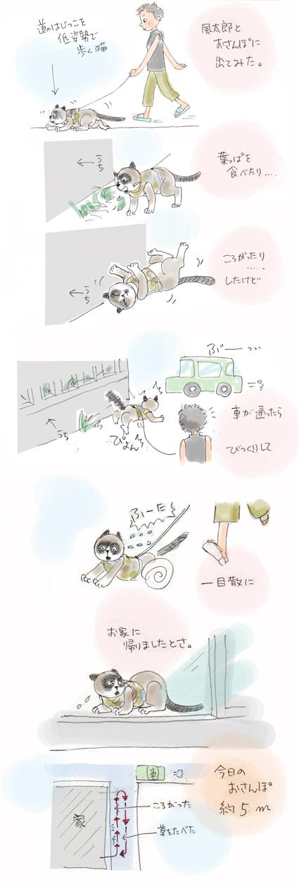 風太郎とお散歩
