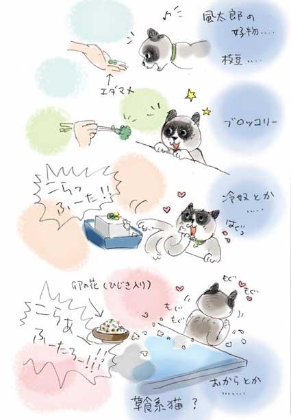 草食系猫.....?